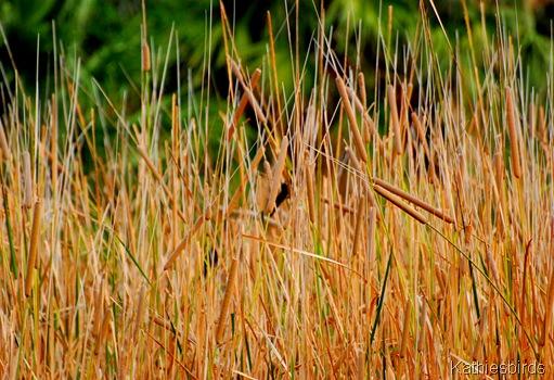 2a. reeds-kab