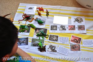 Study of Reptiles