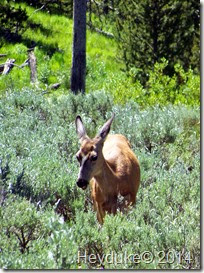 Yellowstone NP and Teton NP 012
