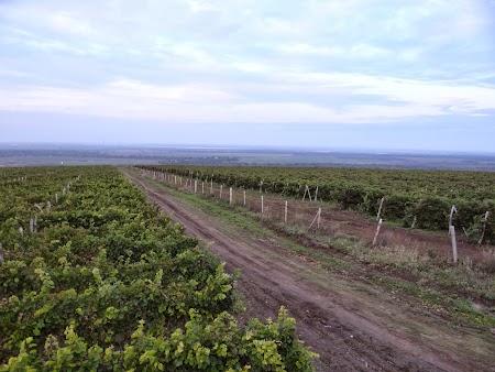Basarabia - Drumul Vinului: Podgoria Purcari