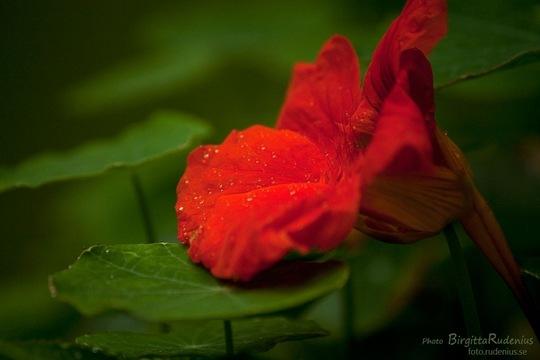 blom_20110723_krasse