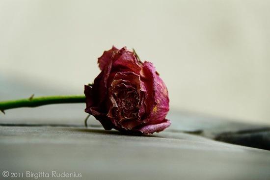 blom_20111003_ros1