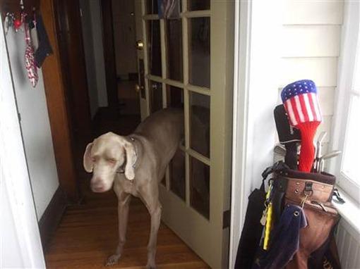 Пес прошел сквозь дверь