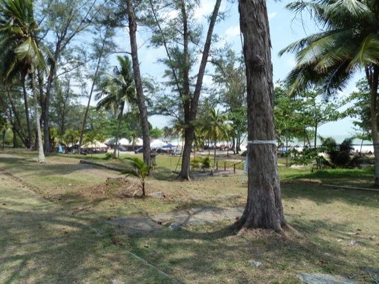 Tree lined beach at Desaru