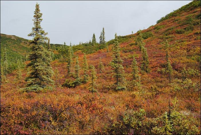 2013_08_Alaska 1089