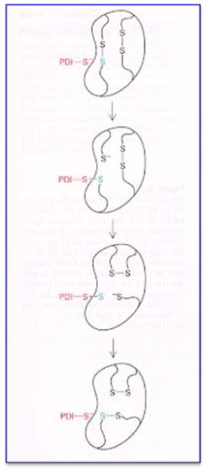 protein disulphades