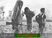 Bangladesh_Liberation_War_in_1971+12.png