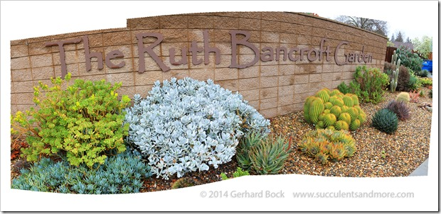 Entrance plantings at Ruth Bancroft Garden
