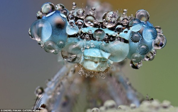 Secret life of a bug Water droplets make this inset look twice the size