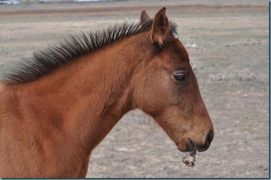 05-09-13 horses 25