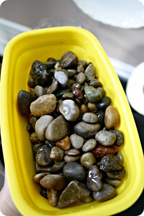 rocks for terrarium