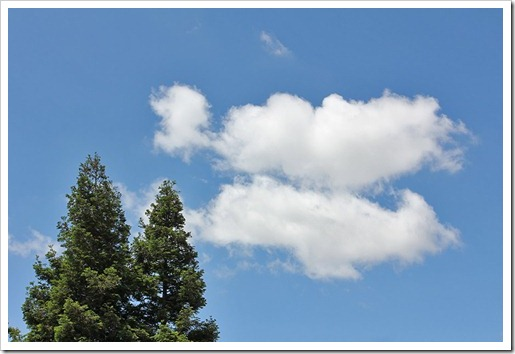 110607_clouds_redwoods
