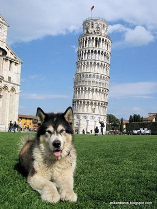 Bondi & the leaning tower #1