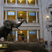 National Museum of Natural History, Washington D.C.
