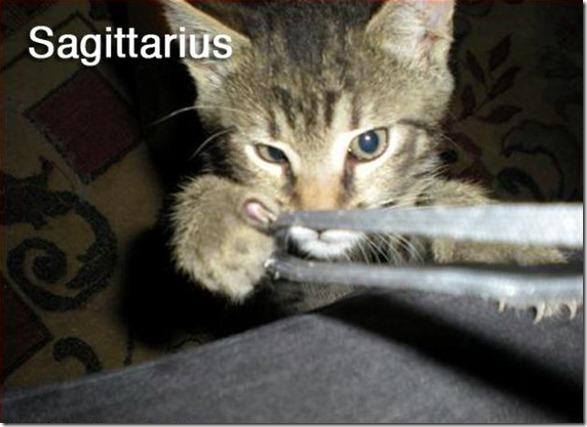 cats-signs-zodiac-3