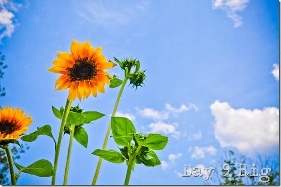 flowers-4323