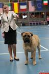 20130511-BMCN-Bullmastiff-Championship-Clubmatch-1658.jpg