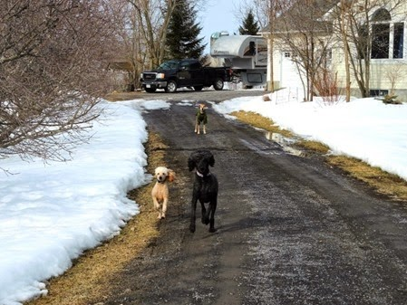 20150320_161436-dogs-laneway