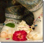 Flower offered at Krishna's lotus feet