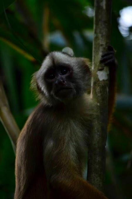 Jungla amazoniana: insula maimutelor