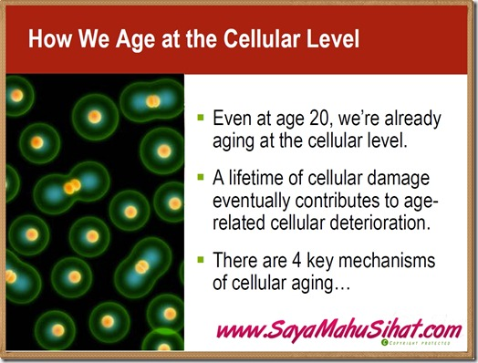 How we age at Cellular Level_Vivix