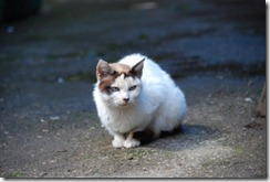 gato DSC_052113