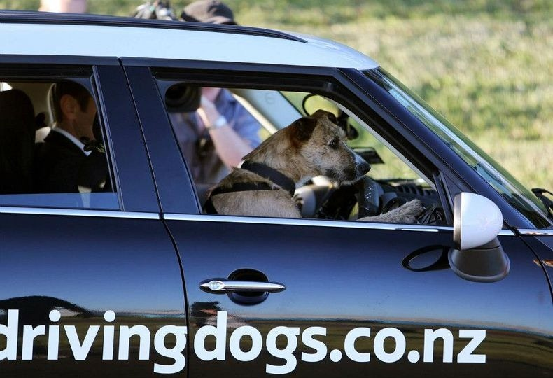 driving-dogs-6