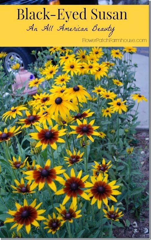 Black-Eyed-Susan-FlowerPatchFarmhouse_com_thumb
