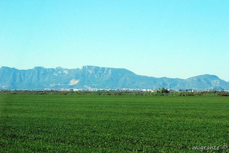arrozales - valencia