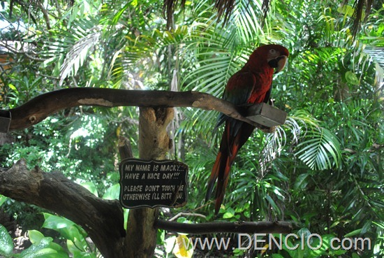 Coco Grove Resort Siquijor 46