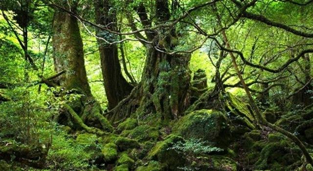 bosque-fuente-vida