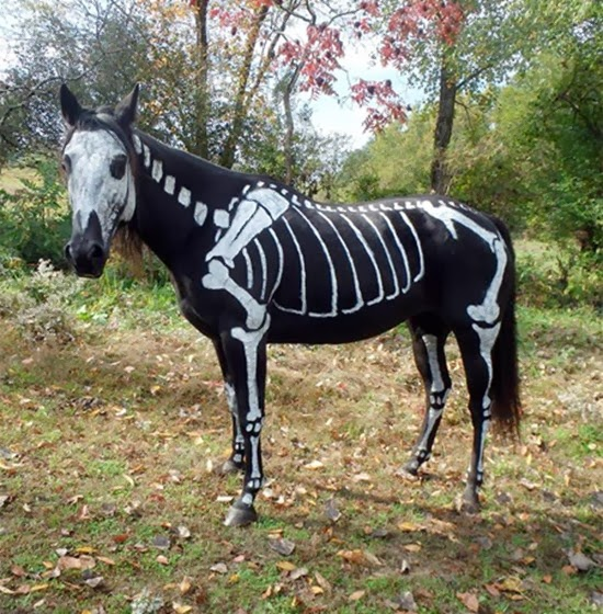Cavalo esqueleto 05