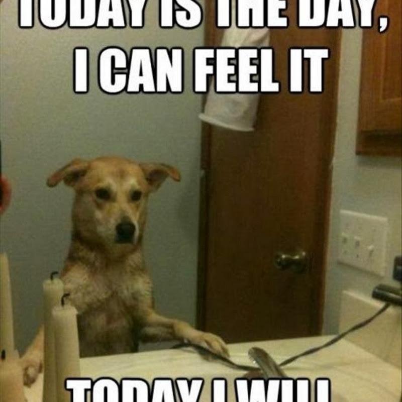 Ini Yang Dipikirkan Anjing Saat Bercermin