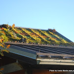 Mountain Moss-NC Arboretum Green Roof-2-Web.JPG
