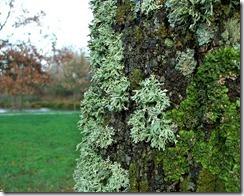 lichenes-algae-fungi 2