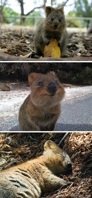 animal feliz
