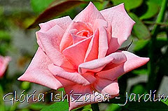 21   - Glória Ishizaka - Rosas do Jardim Botânico Nagai - Osaka