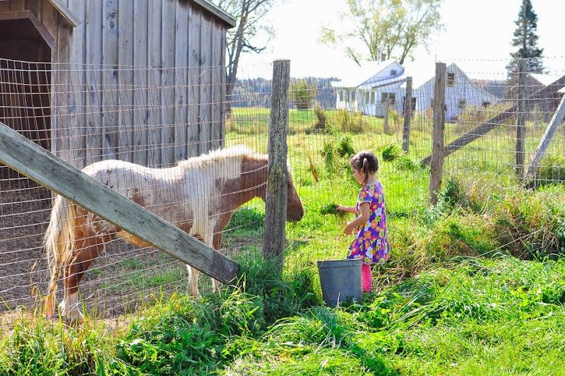 bragg farm-9303