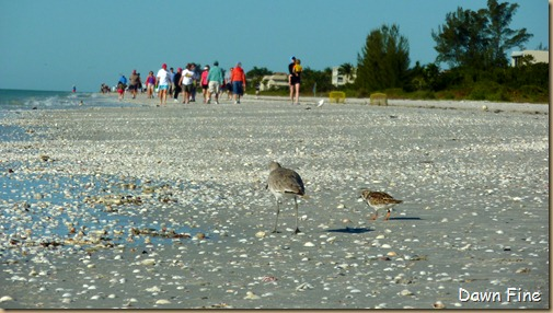 Sanibel Shell and birds_080