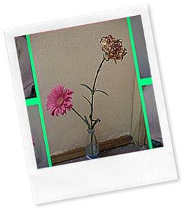 flowers(2)