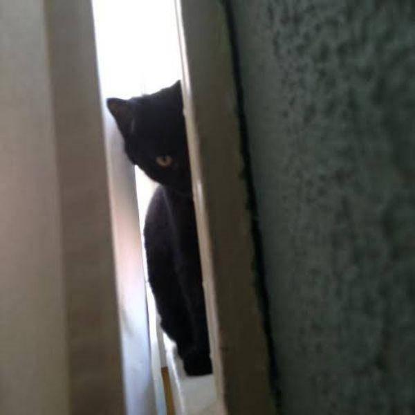 Os gatos não são muito bons em esconde-esconde 3