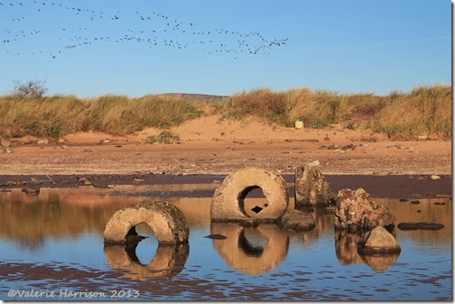 47-geese-and-reflections