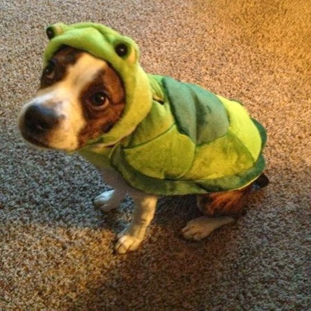 Turtle  www.besohappyblog.com