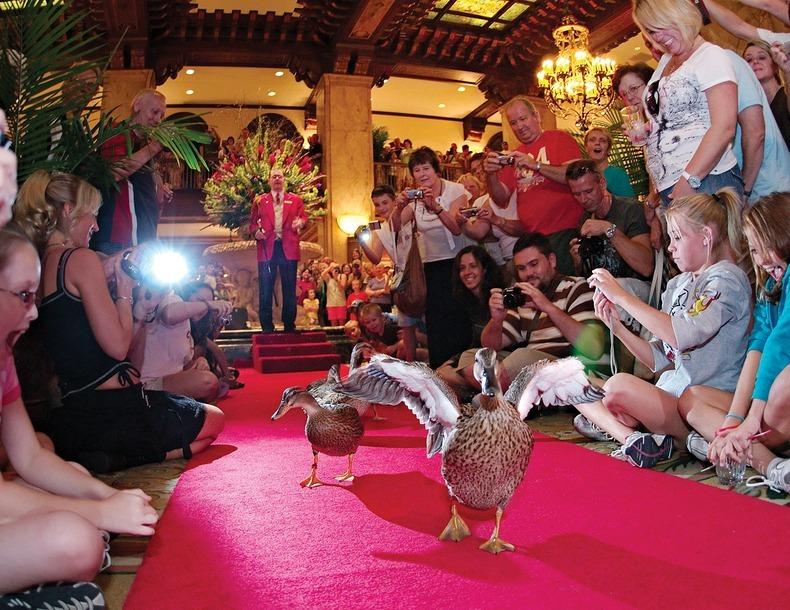 peabody-ducks-1