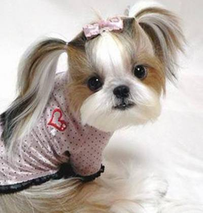 Nice Hairstyles for pets..