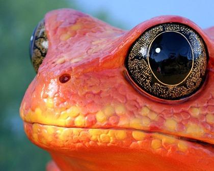orangefrog-850431