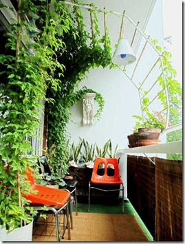 """This is my balcony garden. I want to have a canopy of greenery to have feeling of intimacy. I build the trelis with copper metal and bamboo.<br />The 3 retro chairs ( 2 orange and 1 black) were bought @ graigslist for $20.00 The Bacchus wall sconce is a garage sale find for $5.00<br />1. At the front vine plant called Clematic.<br />2. the other vine plant is called White lace Susan.<br />3. On the wall are Snake Plant better known as """"Mother-in-Law's Tongue"""".<br />4. On the lead are Geranium.<br />5. The climbing plant at the rail are  vegetable plant called """"Bitter Melon"""""""