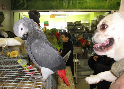 Of course, there are parrots everywhere.  This African Grey was as cool as a cucumber.