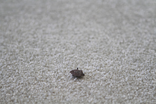 Oh no!  It's another one of those musty smelling stink bugs!