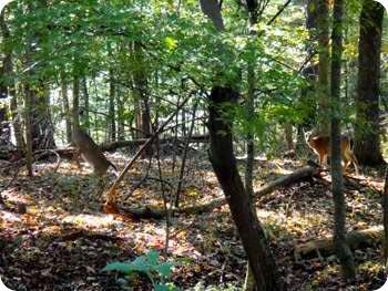 19-deer